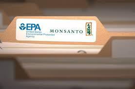 """Oficial de la EPA, acusado de ayudar a Monsanto a """"cajonear"""" un estudio sobre el riesgo cancerígeno de sus productos"""