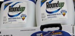 Monsanto culpable: segunda condena contra el Roundup por cancerígeno