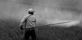 Datos sueltos y mezclados: La EPA sobre el Roundup de Monsanto