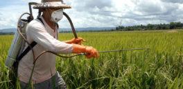 Se acerca el veredicto: El primer juicio que alega que Roundup de Monsanto provoca cáncer en horas decisivas