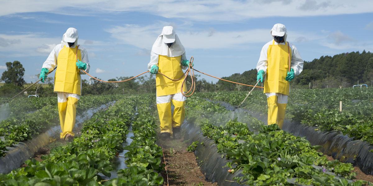 Monsanto Papers: El glifosato en la mira